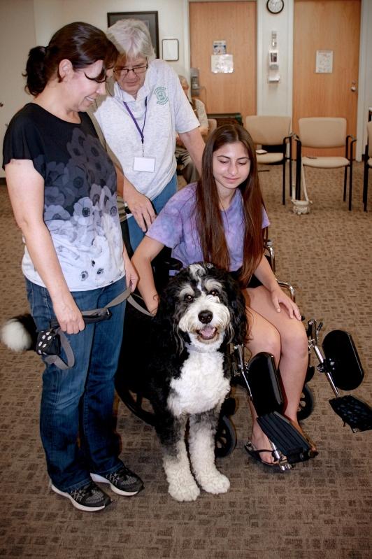 other volunteer opportunities - creature comfort pet therapy